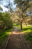 Path in pine forest. In a sunny morning of spring, green, nature, wood, scene, tree, environment, natural, park, sunlight, plant, trees, scenic royalty free stock photography