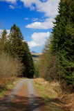 Path through the pine forest in Wales Stock Image