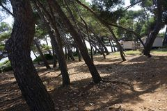 Path through Pine trees Mediterranean Tourist Holiday Camping Si royalty free stock image
