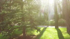 Path between pines in park stock footage