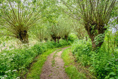 Path between pollard willow trees in springtime. Idyllic path between budding willow trees. It`s spring, it smells spicy and the wild plants bloom exuberantly Stock Images