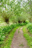 Path between pollard willow trees in springtime. Idyllic path between budding willow trees. It`s spring, it smells spicy and the wild plants bloom exuberantly Royalty Free Stock Photos