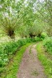 Path between pollard willow trees in springtime Royalty Free Stock Photos