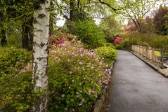 A path in Portland`s Crystal Springs Rhododendron Garden Royalty Free Stock Images