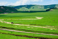 The path on the prairie Stock Image