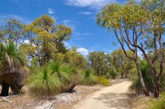 Path in Protected Australian Bushland Stock Photography