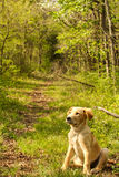 Path of Pup Royalty Free Stock Images