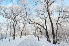 The path in the pure white world Royalty Free Stock Photography