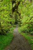 Path in rain forest stock photos