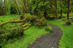 Path in rain forest Stock Photography