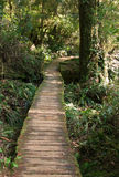 Path through the rain forest. Wooden Path Winding Through the Rain Forest royalty free stock photography