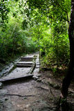 Path in the rain forest Royalty Free Stock Photography