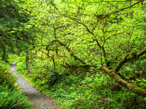 Path through the rain forest Stock Images