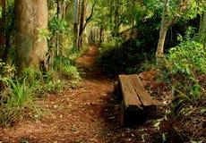 Path through rainforest. A view along a winding path through the dense rain forest the Gold Coast Hinterland of Queensland, Australia Stock Images