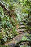 Path through the rainforest Royalty Free Stock Photos