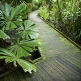 Path in rainforest. Stock Photos