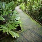 Path in rainforest. Wooden walkway through Daintree Rainforest, Australia Stock Photos