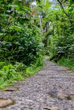 A path in the rainforest stock photography