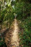 Path in rainforest Stock Photo