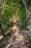 Path in rainforest Royalty Free Stock Photo