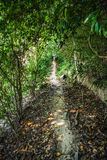 Path in rainforest Royalty Free Stock Photography