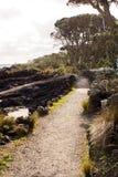 Path on Rangitoto Island. A shell path winds around the edge of Rangitoto Island in the Hauraki Gulf of New Zealand Royalty Free Stock Photo