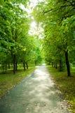 Path receding through park Stock Photography