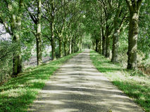 Road in the netherlands Royalty Free Stock Photo