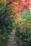The path and red leaves Royalty Free Stock Photos