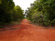 Path of red soil in Brazil. Way with typical red soil in the botanical garden in Brasilia Royalty Free Stock Images