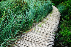 Path and reeds Stock Images