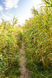 Path in the Reeds Stock Images