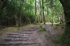 Path in Relict forest of Torc Mountain. Stock Photography