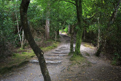 Path in Relict forest of Torc Mountain. Royalty Free Stock Photography