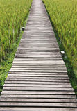 The path between rice field Royalty Free Stock Photos