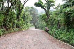 Path through rich highlands vegetation along the caffeinated com Stock Photo
