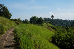 Path on a ridge in Bali royalty free stock photography
