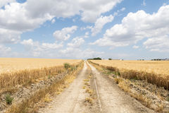 Path through ripe wheat field Royalty Free Stock Photo