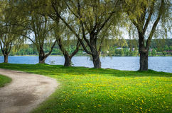 A path by the river with green trees Royalty Free Stock Images