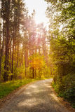 Path Road Way Pathway On In Summer Sunny Forest at Sunset or Sun Stock Photos