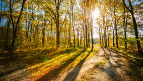 Path Road Way Pathway On Sunny Day In Autumn Sunny Forest Trees, Stock Image