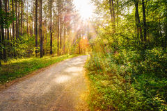 Path Road Way Pathway On Sunny Day In Summer Sunny Forest at Sun Stock Photography