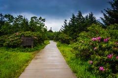 Path through the Roan Mountain Rhododendron Gardens, near Carver Royalty Free Stock Photos