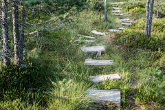Path. Royalty Free Stock Photography