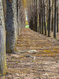 Path through row of trees Stock Photography