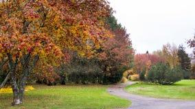 Path through rowan berry trees. In public park in Seinajoki in Finland stock photo