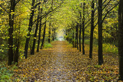 Path between rows of trees Stock Images