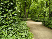 Path In Royal Park - Warsaw. Royal Park of Lazienki in Warsaw. Empty morning nobody here. Dirt path Stock Photos
