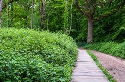 Path through Ruislip Woods, London Borough of Hillingdon, UK. Woods is an ancient woodland.