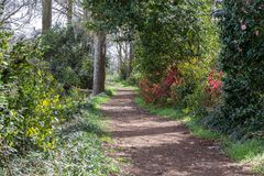 Path that runs through the woods. Path in the woods surrounded by trees and bushes Royalty Free Stock Image